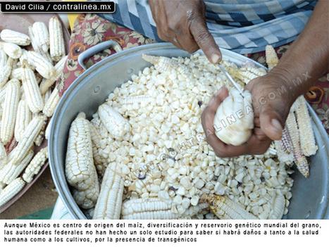 Radio La Nueva República » Cofepris aprueba el consumo humano de maíz tóxico | Stop Monsanto | Scoop.it