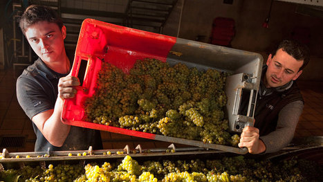 Putting a Face on Pinot Blanc   Vitabella Wine Daily Gossip   Scoop.it