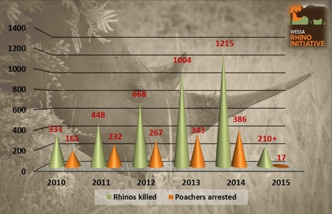 Current Rhino Poaching Stats by Province, Reserve, Number Arrested | What's Happening to Africa's Rhino? | Scoop.it
