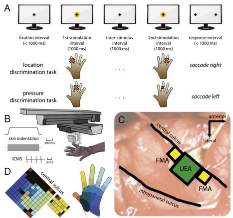 Restoring touch for amputees using a touch-sensitive prosthetic hand | KurzweilAI | The future of medicine and health | Scoop.it