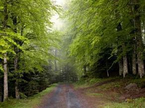 Reforest'Action : la reforestation au service du développement économique | Prêts à pousser le monde vers un air plus sain | Scoop.it