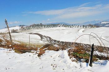 Lazio: emergenza neve, 5,5 milioni dal Psr alle imprese agricole danneggiate   Piccole e Medie Imprese (PMI)   Scoop.it