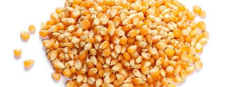 OGM: la Commission européenne autorise 11 nouvelles variétés de maïs | Alimentation Santé Environnement | Scoop.it