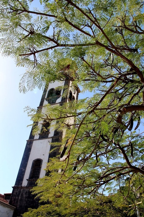 Santa Cruz de Tenerife Travel Guide - Getting your bearings - Beanies Bakes | Tenerife | Scoop.it