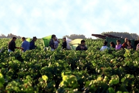 Bordeaux 2013: teetering on the brink | Southern California Wine and Craft Spirits Journal | Scoop.it
