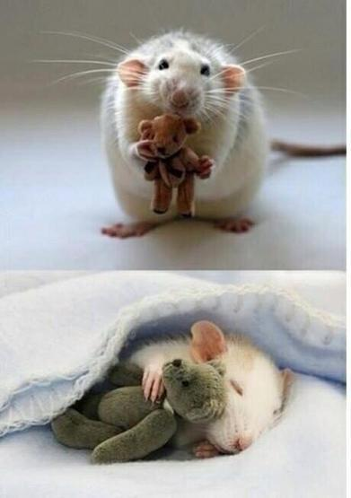 Twitter / Hhare11: A lady makes teddy bears for ... | Cute Teddy Bears & Stuffed Animals | Scoop.it