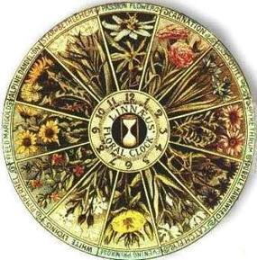 Carolus Linnaeus's Floral Clocks   Bio { Cultural } Diversity   Scoop.it