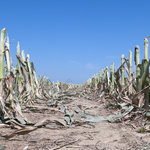 U.S. Sees Food Prices Rising From Severe Drought | Food Security | Scoop.it