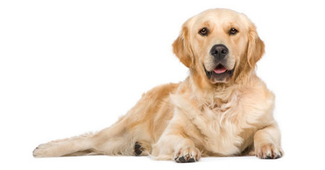 All About Cancer in Dogs – PetPremium | Dog Lovers | Scoop.it