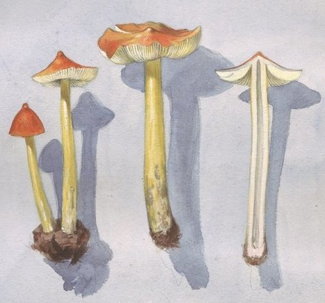 Mushrooms May Really Be Magic After All | Plant Pathology | Scoop.it