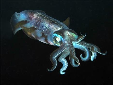 Roatan Marine Park announces photo contest winners (w/Slides) | UW Photography | Scoop.it