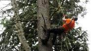 People power to help tackle tree disease - National Trust | CW | Scoop.it