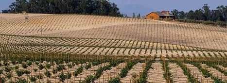 #Drought Clouds Future of #California #Wine Industry | Vitabella Wine Daily Gossip | Scoop.it