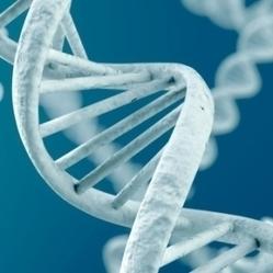 L'ADN d'un humain vieux de 400 000 ans mis à nu - Réponse a Tout   Evolution de l'Homme   Scoop.it