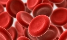 Study remaps how blood cells form | Science Tools for School | Scoop.it