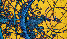 Physics for the 21st Century | Wisdom 1.0 | Scoop.it
