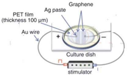 Graphene has the potential to reshape neurosurgery | Science, Technology, and Current Futurism | Scoop.it