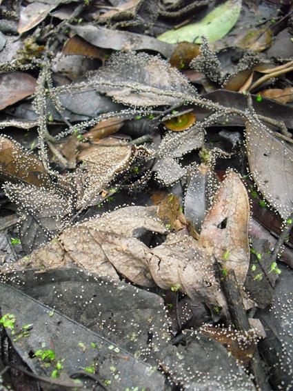 De l'importance de la biodiversité dans la décomposition des litières forestières   EntomoNews   Scoop.it