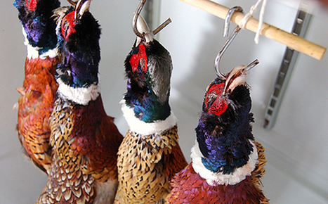 How to Hang a Pheasant   Historical gastronomy   Scoop.it