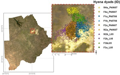 Using Spatially Explicit Simulated Data to Analyze Animal Interactions: A Case Study with Brown Hyenas in Northern Botswana | geographica | Scoop.it