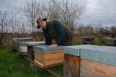 Les abeilles privées de gelées - L'Union   Abeilles, intoxications et informations   Scoop.it