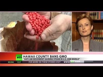 GMO-Free Hawaii: 'Big Island' bans biotech companies | regulación biotecnología | Scoop.it