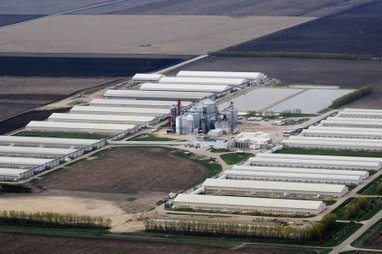A huge US food distributor says bird flu could hurt egg supply for the next year   Virology News   Scoop.it