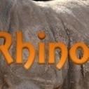 Rhino News: Poachers caught, illegal trade network, UN Resolution | Rhino poaching | Scoop.it