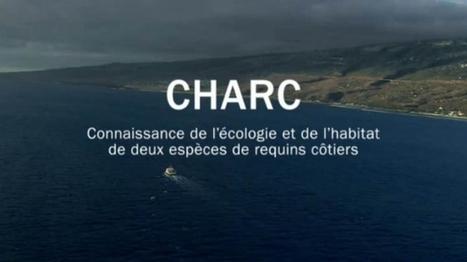 Risque requins : une vidéo explicative et un grand colloque - Imaz Press Réunion | Dans mon sac de plouf | Scoop.it