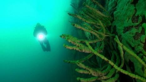 Vidéo Full HD | Sibérie - Plongée au cœur du lac Baïkal ! | Plongeurs.TV | Scoop.it
