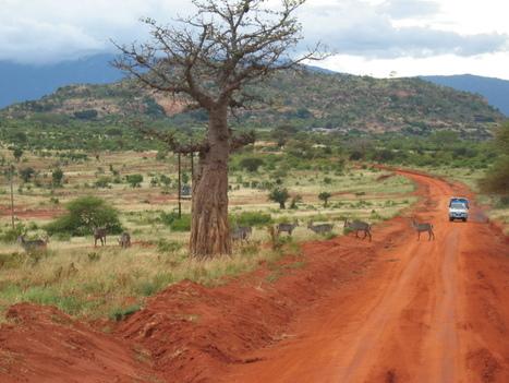 Comfort camping safari in Botswana | ViaggiSudAfrica | Scoop.it