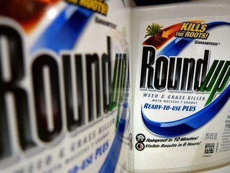 EPA pulls report saying herbicide glyphosate is safe | Grain du Coteau : News ( corn maize ethanol DDG soybean soymeal wheat livestock beef pigs canadian dollar) | Scoop.it