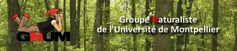 Montpellier. Inventaire Biodiversité fac   Variétés entomologiques   Scoop.it