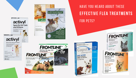 Have You Heard About These Effective Flea Treatments for Pets? - CanadaPetCare Blog | Pet Supplies | Scoop.it