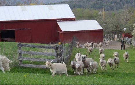 Happy Rescued Farm Animals Run To Pasture for the First Time! The Ending Is Too Adorable | Nature Animals humankind | Scoop.it