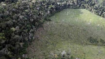 Des arbres centenaires d'Amazonie rasés pour la visite du pape | News from the World | Scoop.it