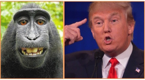 "Question: Which of These Primates Knows More About Climate Change? | ""You Shall Not Pass"" 