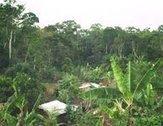 RIDDAC - Portail des Forêts, de l'Environnement et du Développement durable en Afrique centrale | Technologie Robotique et développement durable 3403 | Scoop.it