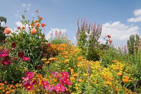 Expert tips for your garden in August   Landscape and Garden Design   Scoop.it