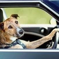 Drivingdogs | brand storytelling | Scoop.it