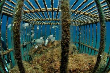 Méditerranée: les chantiers se multiplient pour réhabiliter les côtes | Marseille, entre aménagement et déménagement | Scoop.it
