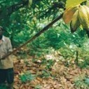 $1.2 bn To Purchase 830000 Tonnes of Cocoa This Season - spyghana.com | Fairly Traded News | Scoop.it