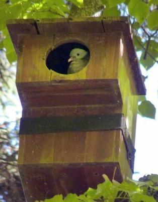 Hogares de madera para las aves de Burgos - Correo de Burgos | Casa NIDO - HOUSE NEST | Scoop.it