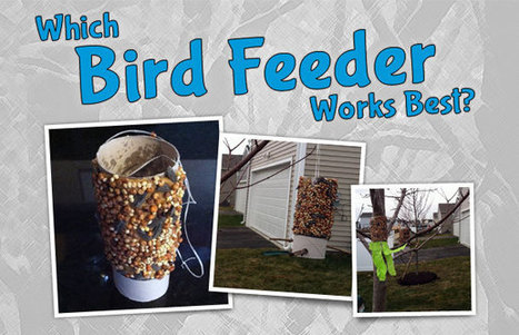 Build Your Birding Skills with Our Bird Feeder Experiment | What's Up With Birds | Scoop.it