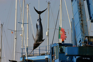 Long-vilified swordfish industry finds support in environmental group   Food issues   Scoop.it