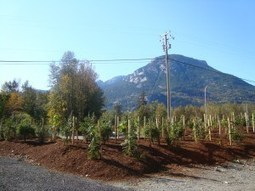 Spruce Up The Appearance Of Home By Variety Of Garden Landscape Supplies   West Coast Bark Products Inc.   Scoop.it