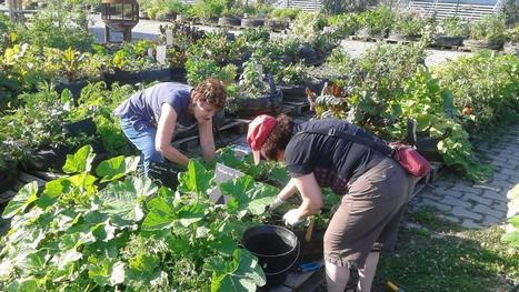 Lille - À la Ferme urbaine, jardinage et copinage font bon ménage | Innovation sociale | Scoop.it