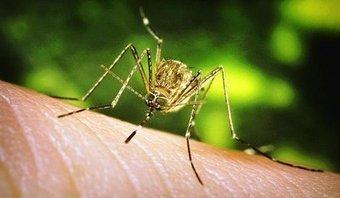 Aube : Les moustiques envahissent le département | EntomoNews | Scoop.it