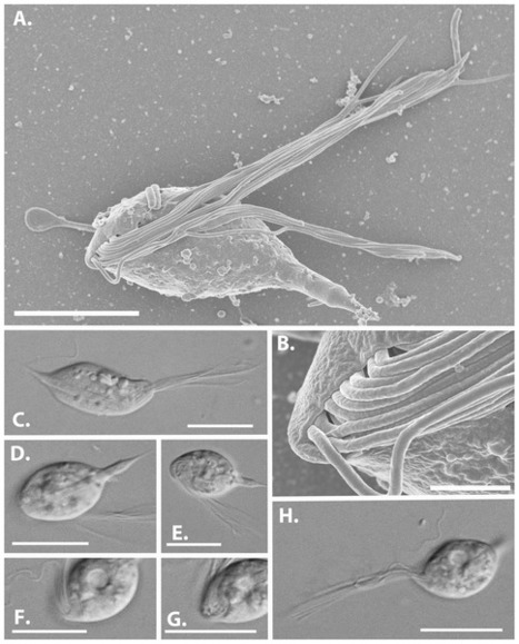 Des monstres de science-fiction... de 20 microns | EntomoNews | Scoop.it