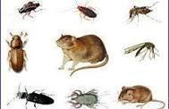 مكافحة حشرات بالرياض - الراقي لكل راقي | شركة تنظيف مجالس بالرياض | Scoop.it